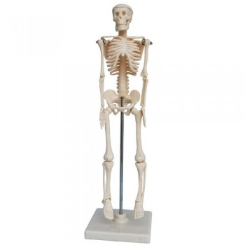 Mini Skeleton 42cm